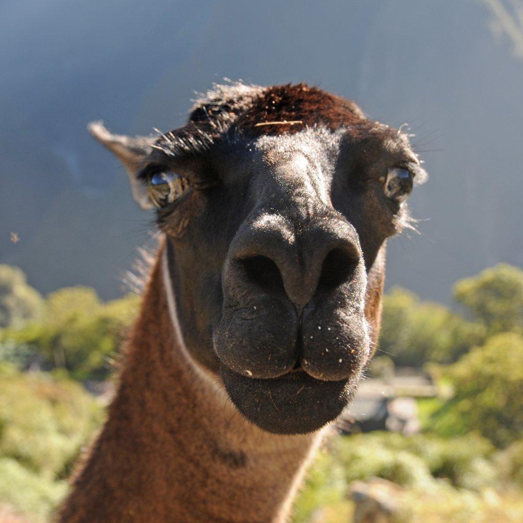 Machu Picchu Travel Guide